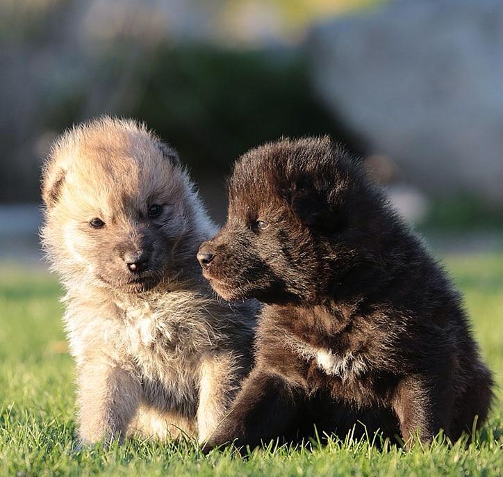 Sun Valley Wolf Kennels LTD